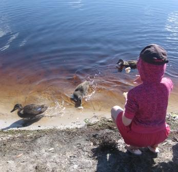 Feeding ducks beside Lake Ainsworth
